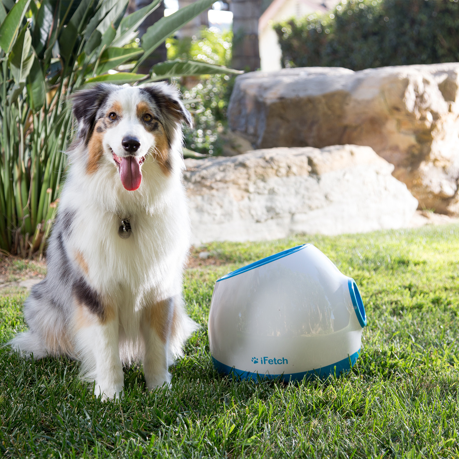 Toy Dogs Or Smaller : Ifetch interactive dog fetch toy small dogs
