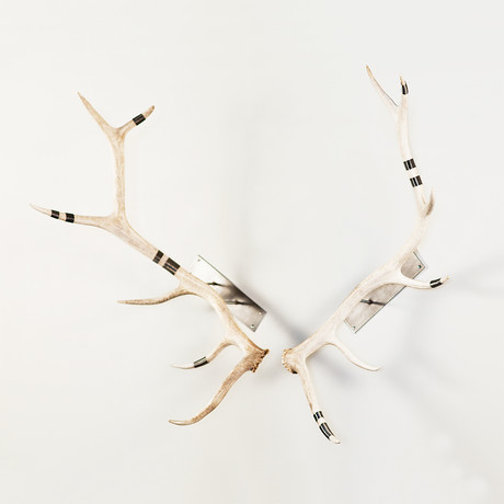 Large Elk Antler Wall Mount (Natural + Black)
