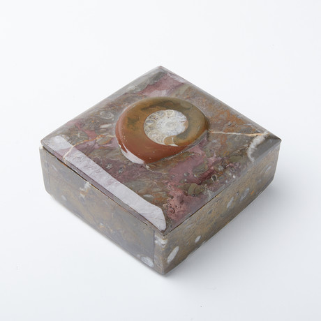 Ammonite Square Box