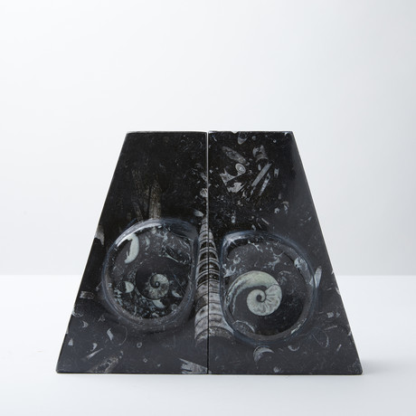 Ammonite Fossils // 2 Bookends