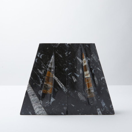 Orthoclase Fossils // 2 Bookends