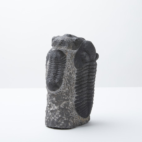 Multi Trilobite Sculpture