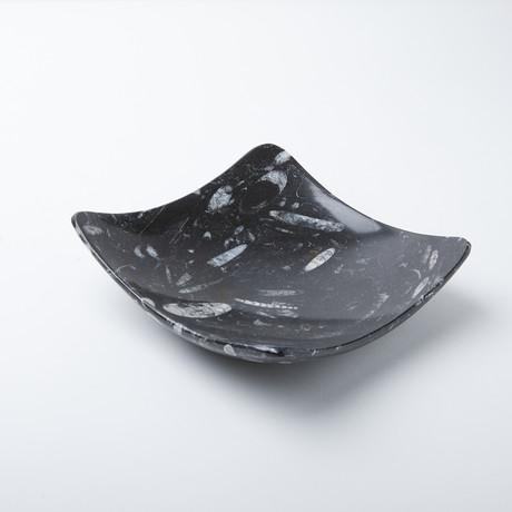 Square Fossil Dish