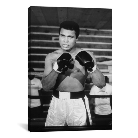"Muhammad Ali With A Fierce Glare While Training // Muhammad Ali Enterprises (26""H x 18""W x 0.75""D)"