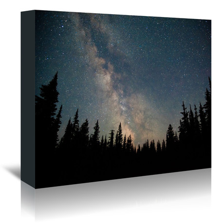 Stars Over The Forest // Canvas Print