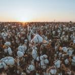 American Cotton Duvet Sheet Set // White (Twin)