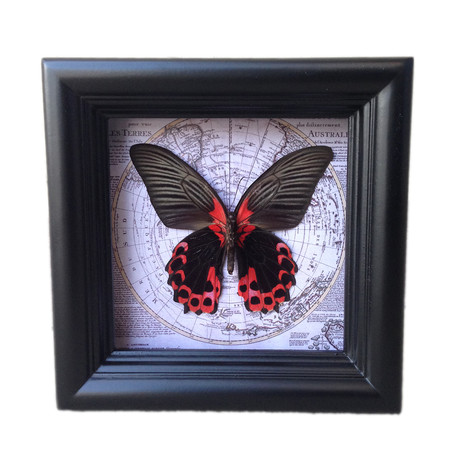 Scarlet Mormon Map Shadow Box