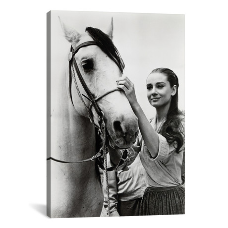 Audrey Hepburn Putting The Bridle On A Horse
