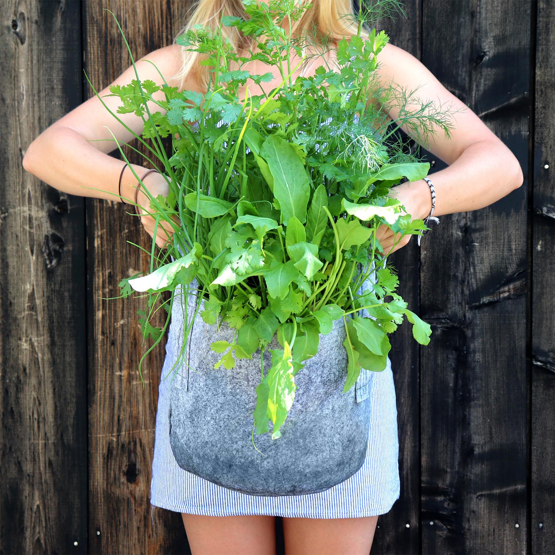 GYO Herbs // Seedsheet + Garden Container
