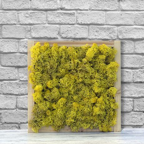Wall Moss // Yellow