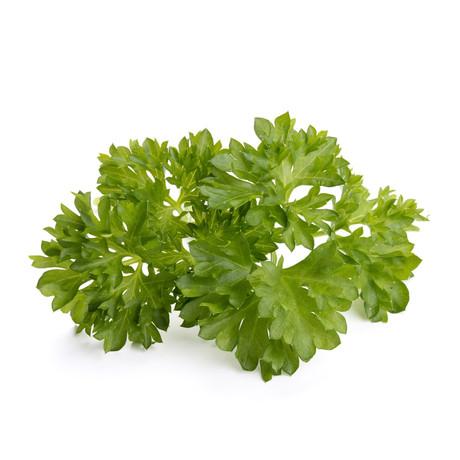 Refill // 3 Pieces // Parsley // Set of 2