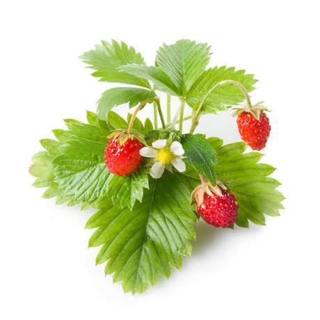 Refill // 3 Pieces // Wild Strawberry // Set of 2