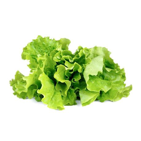 Refill // Lettuce // Set of 2