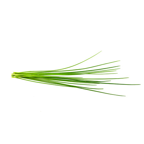 Refill // 3 Pieces // Chives
