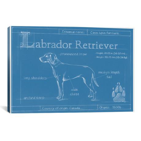 Blueprint Of A Labrador Retriever // Ethan Harper