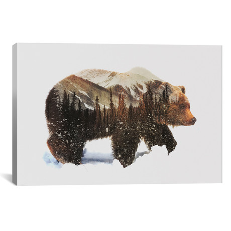 "Arctic Grizzly Bear // Andreas Lie (26""W x 18""H x 0.75""D)"