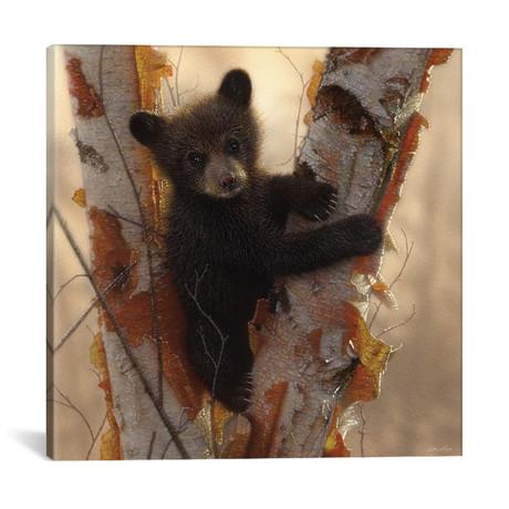 Curious Cub I, Square