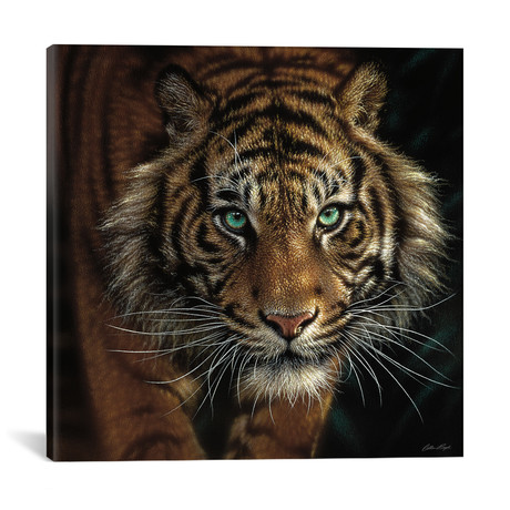 "Eye Of The Tiger, Square // Collin Bogle (18""W x 18""H x 0.75""D)"