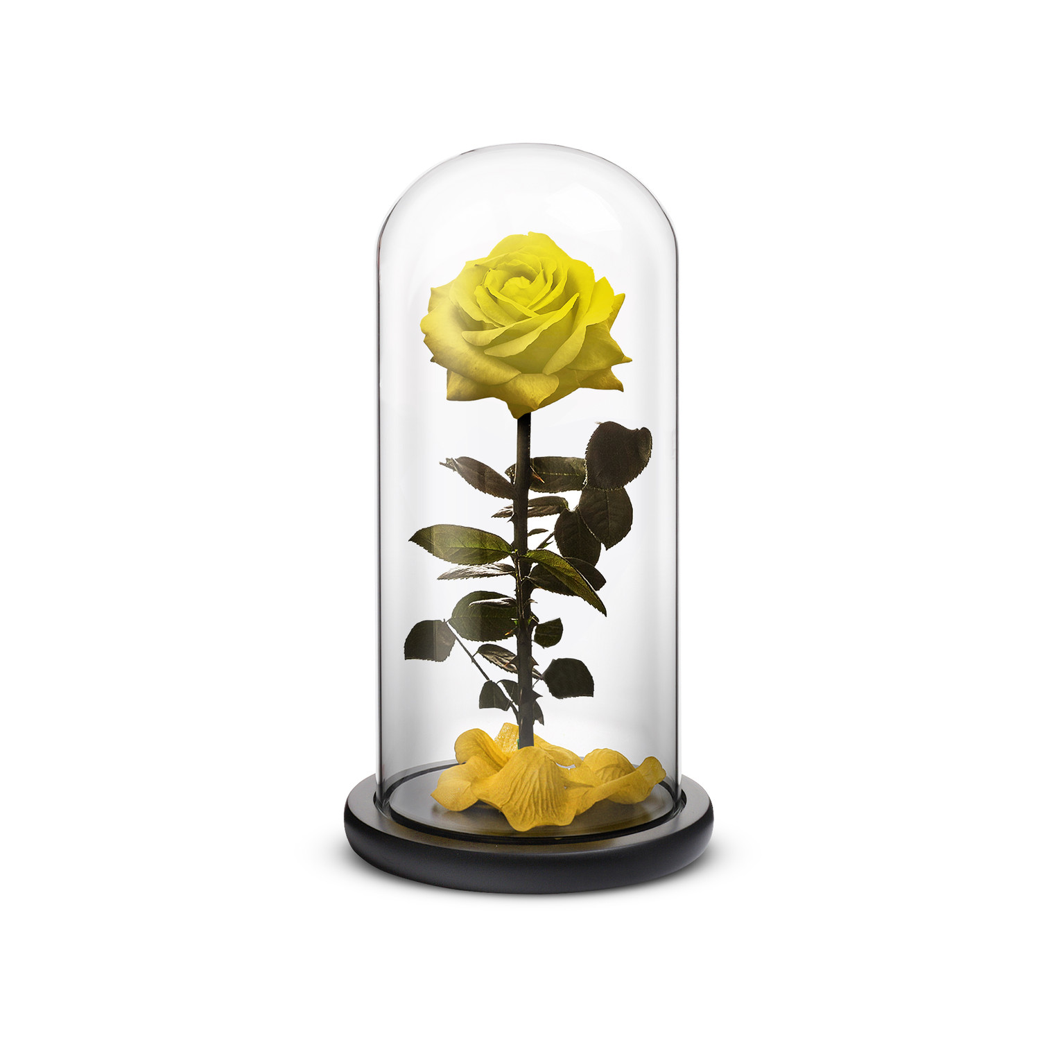 Everlasting Rose Yellow Small Clearance Home Touch Of Modern