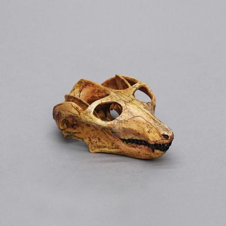 Cynodont Probainognathus Jenseni Skull