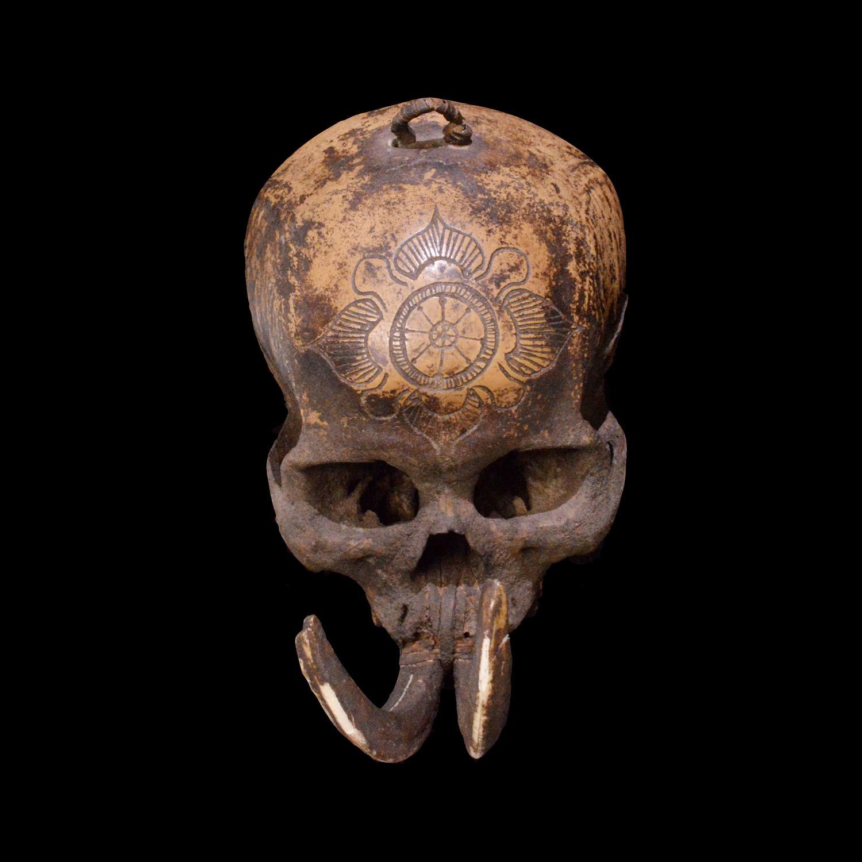 Dayak Headhunter Human Trophy Skull 'Ndaokus' // 3 - Muzeion