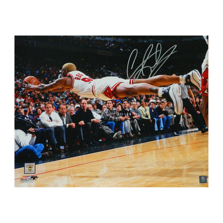 "Dennis Rodman Signed Chicago Bulls Diving For Basketball Photo // 16"" x 20"""