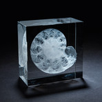 Giant Fossil Ammonite Crystal + LED Base