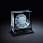 Fossil Ammonite Crystal + LED Base