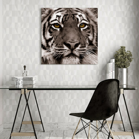 Jungle Animals (Lion)