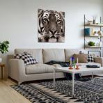Jungle Animals (Tiger)