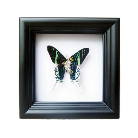 Steampunk Green Moth Shadow Box