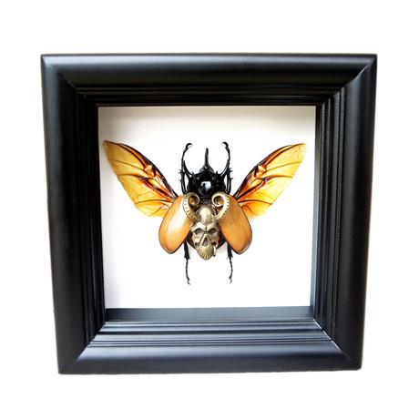 Demon Beetle Shadow Box