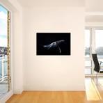 """Black & Whale I // Barathieu Gabriel (26""""W x 18""""H x 0.75""""D)"""
