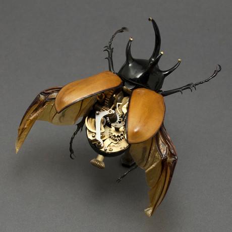 Dynastidae // Eupatorus Gracilicornis