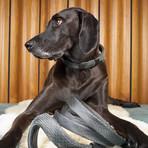 CollarLess Fixed Loop Dog Collar + Silent ID Dog Tag // Charcoal