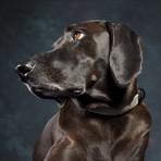 CollarLess Fixed Loop Dog Collar + Silent ID Dog Tag // Tweed