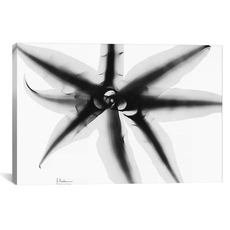 "Cryptanthus // Albert Koetsier (18""W x 26""H x 0.75""D)"