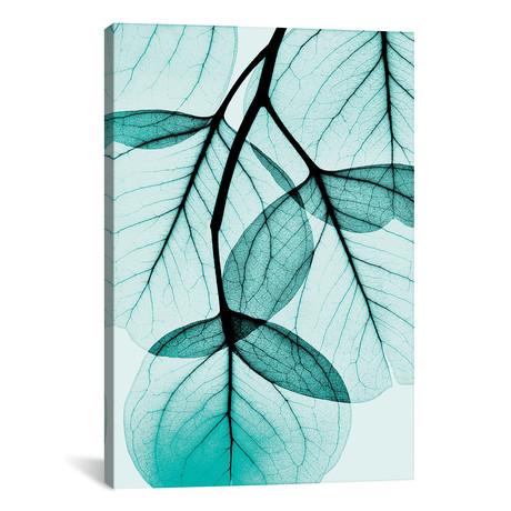 "Teal Eucalyptus // Albert Koetsier (26""W x 18""H x 0.75""D)"