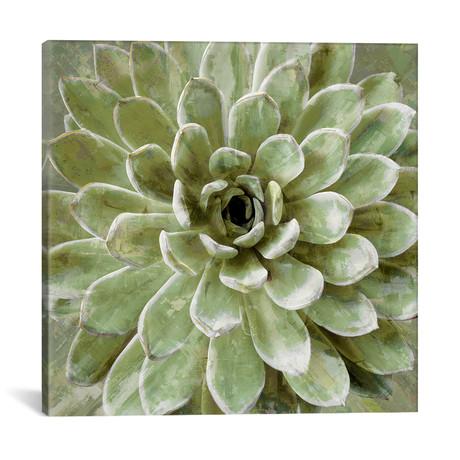 "Succulent VI // Lindsay Benson (18""W x 18""H x 0.75""D)"