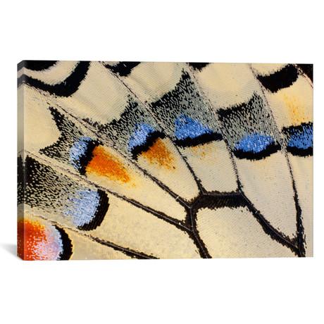 "Butterfly Wing Macro-Photography XX // Darrell Gulin (18""W x 26""H x 0.75""D)"