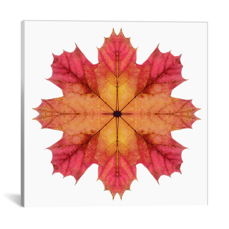 "Red And Pink Maple Leaf Star II // Alyson Fennell (18""W x 18""H x 0.75""D)"