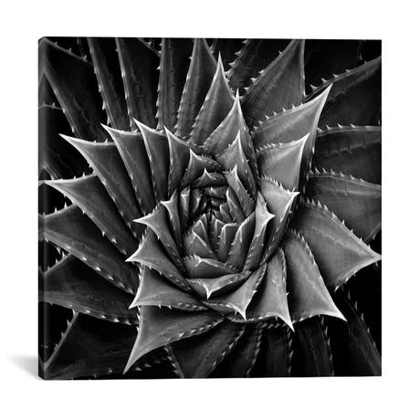 """Black & White Succulent I // Mia Jensen (18""""W x 18""""H x 0.75""""D)"""