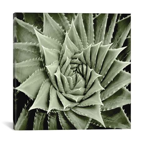 "Green Succulent I // Mia Jensen (18""W x 18""H x 0.75""D)"