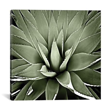 """Green Succulent III // Mia Jensen (18""""W x 18""""H x 0.75""""D)"""