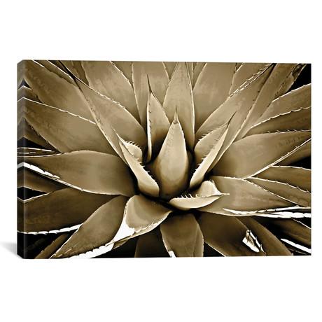 "Taupe Succulent III // Mia Jensen (26""W x 18""H x 0.75""D)"