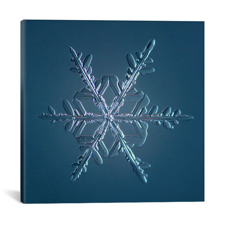 "Stellar Dendrite Snowflake 005.2.16.2014 // Print Collection (18""W x 18""H x 0.75""D)"
