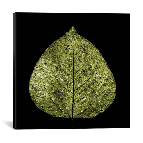 "Green Leaf // PhotoINC Studio (18""W x 18""H x 0.75""D)"