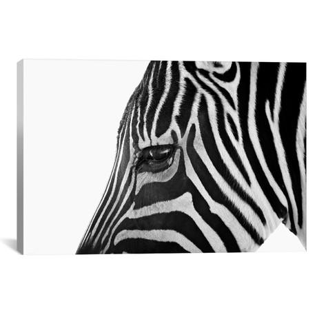 "Ignoring Zebra // Bob Larson (18""W x 26""H x 0.75""D)"
