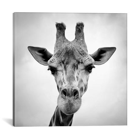 "Giraffe // PhotoINC Studio (18""W x 18""H x 0.75""D)"
