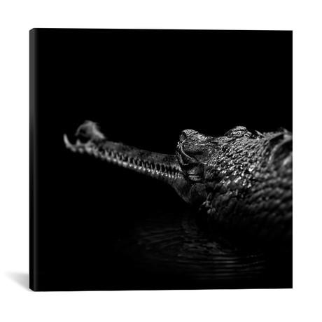 "Gavial In Black & White // Lukas Holas (18""W x 18""H x 0.75""D)"